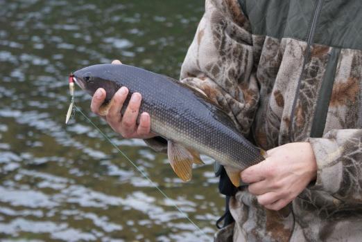 сезоны рыбалки на камчатке